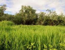 Мягкая зеленая поляна для занятий