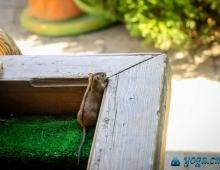 Любопытный мышонок в столовой
