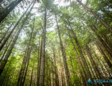 Высота карпатского леса