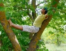 Ощущение силы деревьев