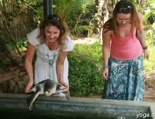Спуск на воду черепахи