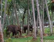 Рабочие слоны
