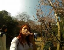 香りの花の桜。- Запах цветков сакуры