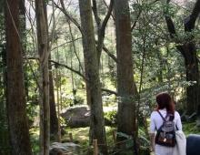 龍安寺の庭に散歩しました。 - Прогулка в саду Рёандзи