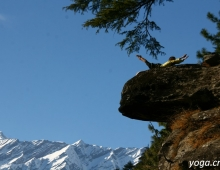 Хатха-йога на обрыве